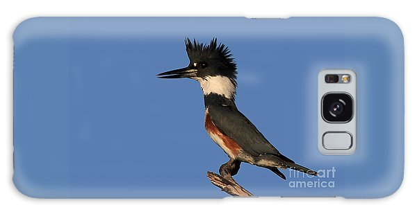 Belted Kingfisher Galaxy Case by Meg Rousher