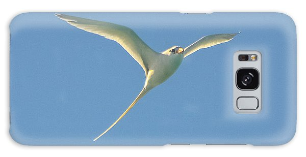 Bermuda Longtail In Flight Galaxy Case
