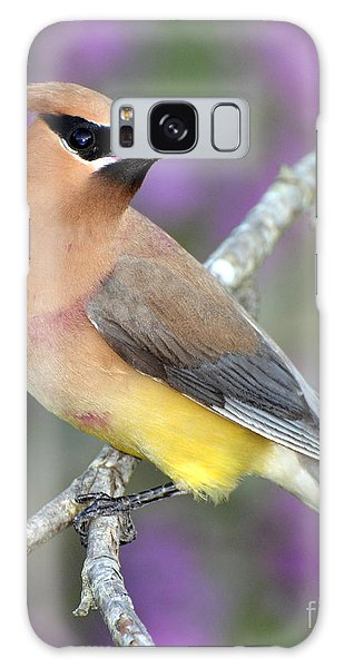 Berry Stained Waxwing Galaxy Case