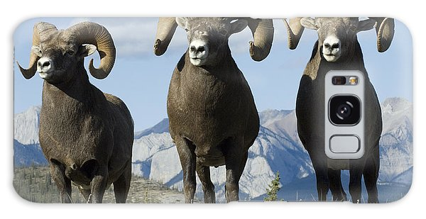 Big Horn Sheep Galaxy Case by Bob Christopher