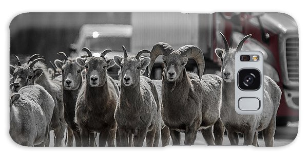 Big Horn Sheep Road Block Galaxy Case