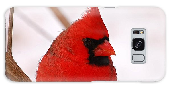 Big Red  Cardinal Bird In Snow Galaxy Case