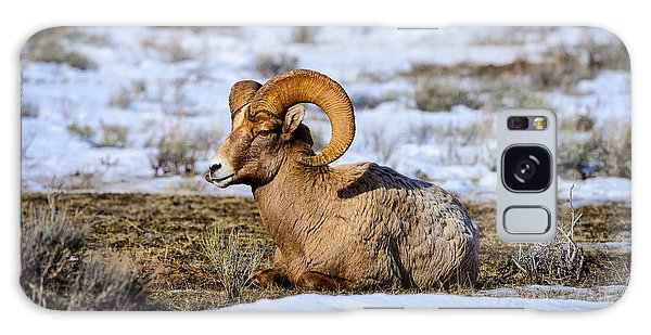 Bighorn Sheep Galaxy Case by Greg Norrell