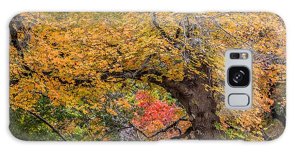Bigtooth Maples Turning Colors Galaxy Case