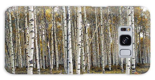 Aspen Trees In Autumn Galaxy Case