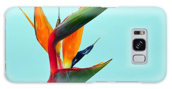 Bird Of Paradise Against Aqua Sky Galaxy Case by Debra Thompson