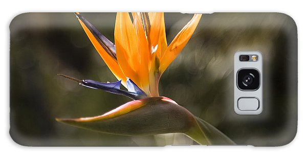 Bird Of Paradise Galaxy Case by David Millenheft