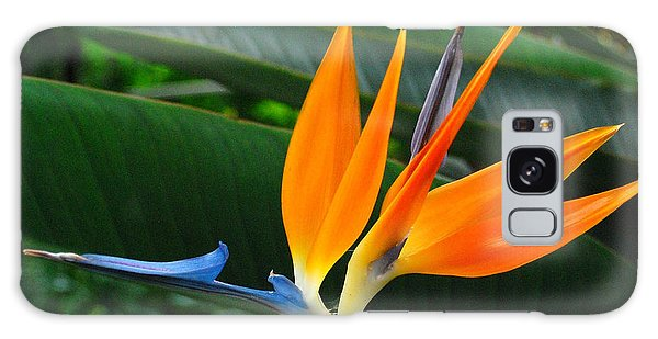 Bird Of Paradise  Galaxy Case by JRP Photography
