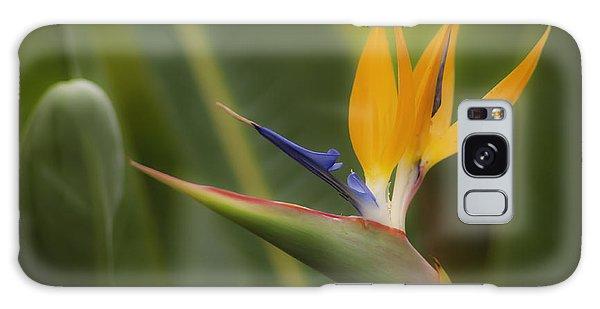 Bird Of Paradise Galaxy Case by Sherri Meyer