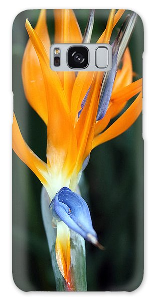 Bird Of Paradise Study 1 Galaxy Case by Mary Haber