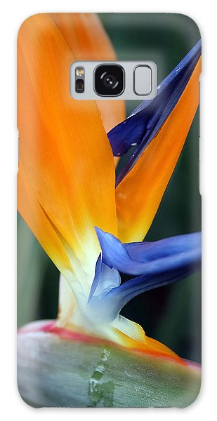 Bird Of Paradise Study 2 Galaxy Case by Mary Haber