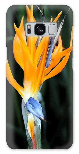 Bird Of Paradise Study 3 Galaxy Case by Mary Haber