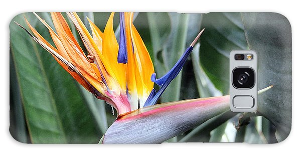 Bird Of Paradise Study 4 Galaxy Case by Mary Haber