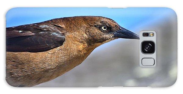 Bird On The Kure Beach Pier Galaxy Case