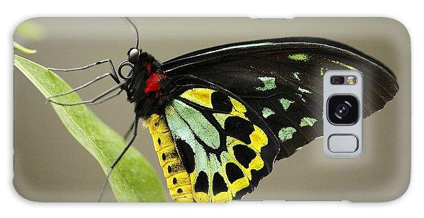 Birdwing Butterfly Galaxy Case by Craig Dingle