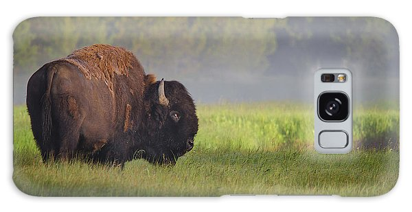 Bison In Morning Light Galaxy Case