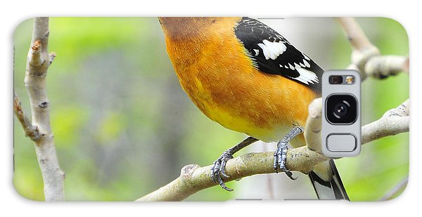 Blach-headed Grosbeak Galaxy Case