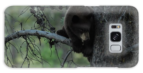 Black Bear Cub In Tree Galaxy Case