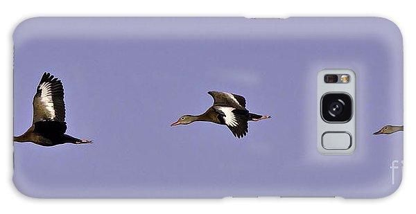 Black Bellied Whistling Ducks In Flight Galaxy Case by Anne Rodkin