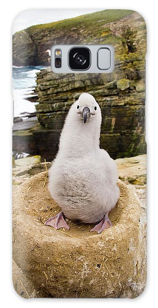 Albatross Galaxy Case - Black-browed Albatross Chick Falklands by