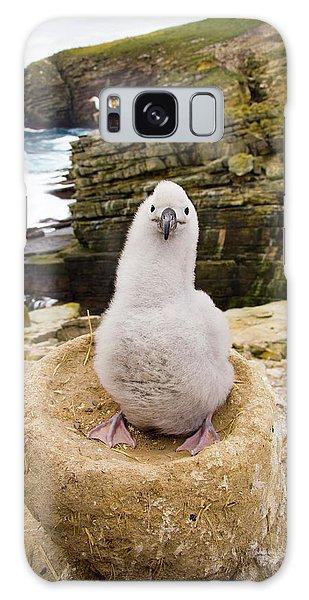 Black-browed Albatross Chick Falklands Galaxy Case