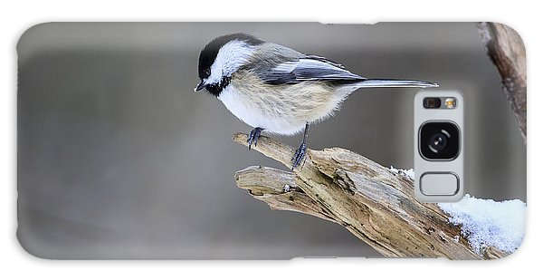 Black-capped Chickadee Galaxy Case by Gary Hall