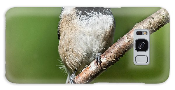 Black Capped Chickadee Galaxy Case