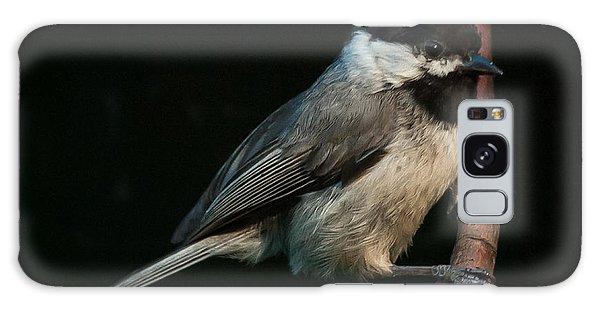 Black-capped Chickadee Galaxy Case