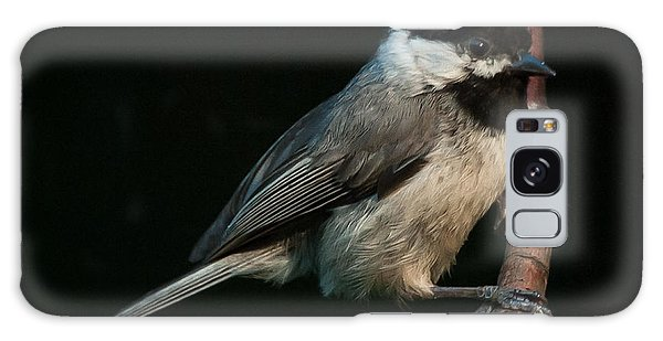 Black-capped Chickadee Galaxy Case by Jim Moore
