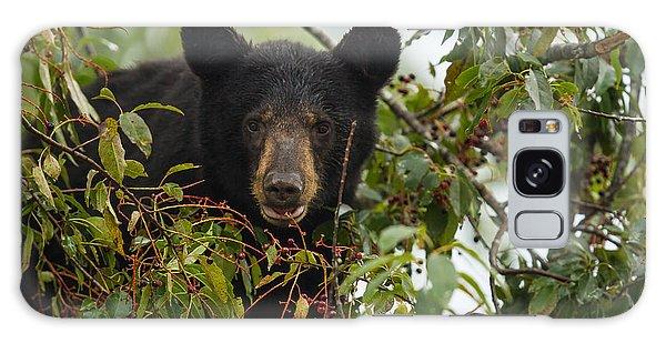 Bear In A Cherry Tree Galaxy Case