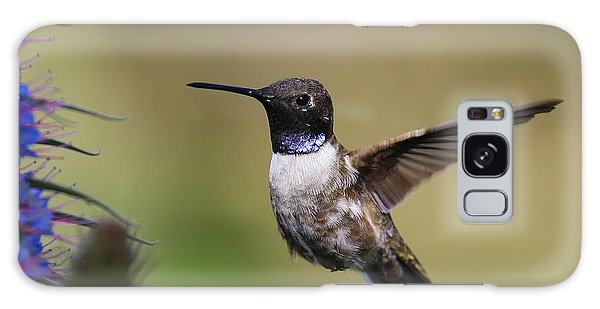 Black-chin Humming Bird Galaxy Case