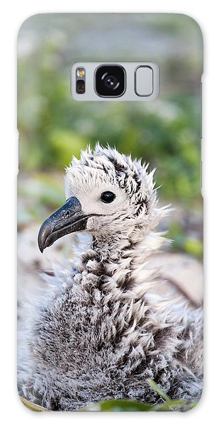 Albatross Galaxy Case - Black-footed Albatross / Phoebastria by Daisy Gilardini
