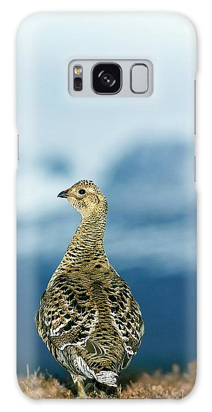 Cairngorms National Park Galaxy Case - Black Grouse Female by Duncan Shaw/science Photo Library