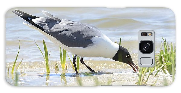 Black Headed Gull Galaxy Case