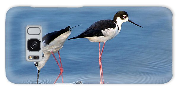 Black-necked Stilts Galaxy Case by Bob and Jan Shriner