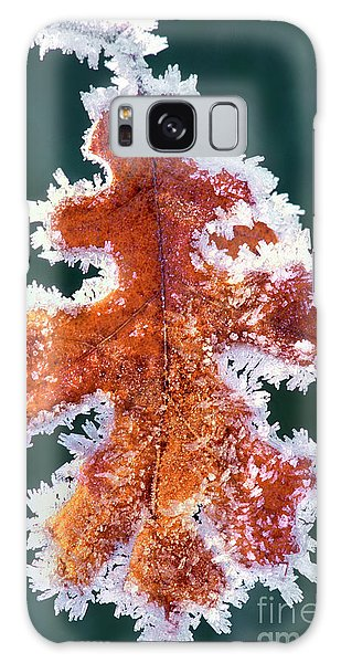 Black Oak Leaf Rime Ice Yosemite National Park California Galaxy Case