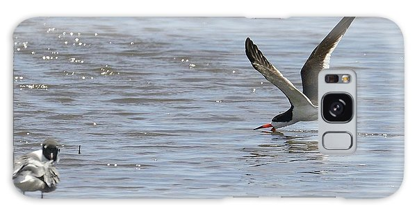 Black Skimmer Looking For Lunch Galaxy Case