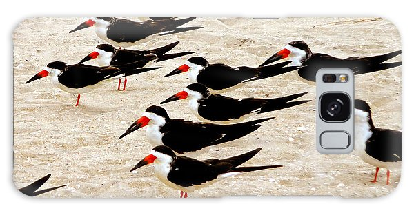 Black Skimmers On The Beach Galaxy Case