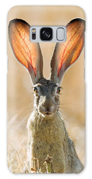 Black-tailed Hare Davis California Galaxy Case