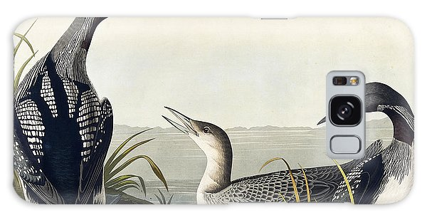 Black Throated Diver  Galaxy Case by John James Audubon