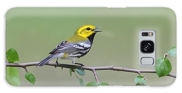 Black Throated Green Warbler Calling Galaxy Case by Daniel Behm