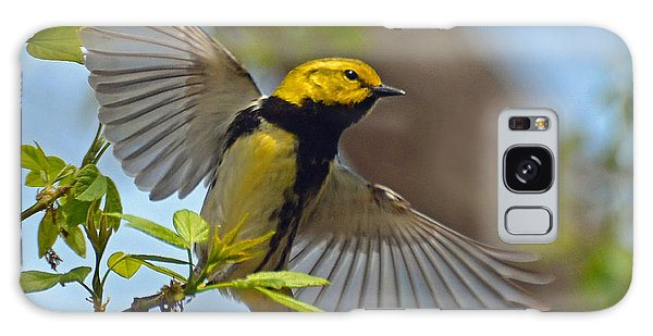 Black Throated Green Warbler Galaxy Case