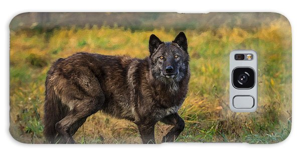 Black Wolf In Fall Colors Galaxy Case