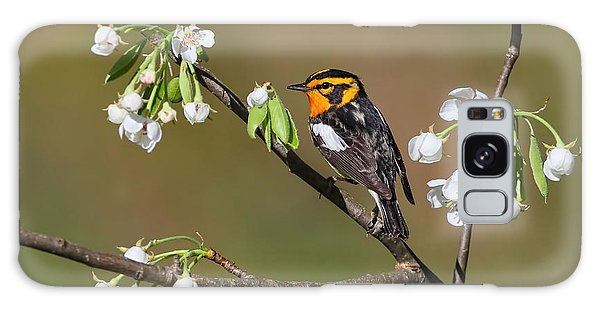 Blackburnian Warbler Galaxy Case