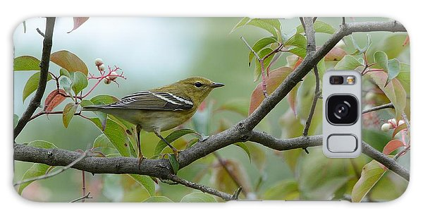Blackpoll Warbler In The Fall Galaxy Case