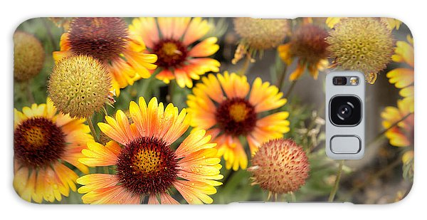 Galaxy Case featuring the photograph Blanket Flowers  by Belinda Greb
