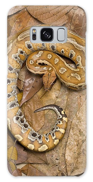 Blood Python Galaxy Case