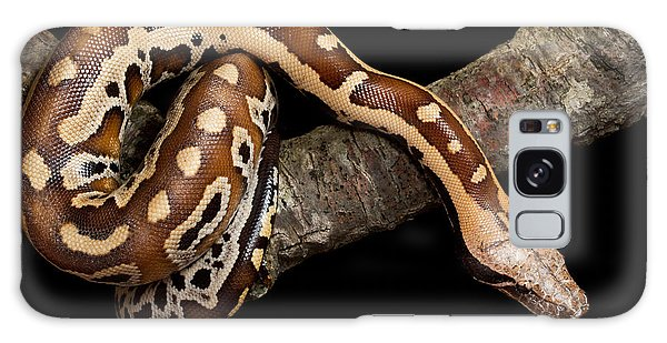 Blood Python Python Brongersmai Galaxy Case by David Kenny