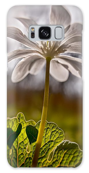 Bloodroot Galaxy Case