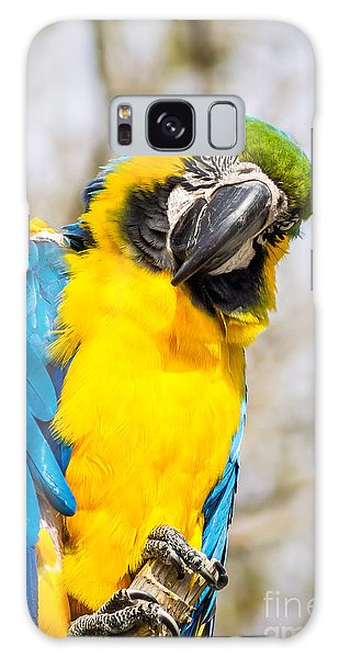 Blue And Gold Macaw Parrot Galaxy Case